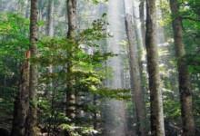 GOZD in LES: Gozd in podnebne spremembe