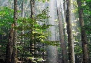 ZNANSTVENO SREČANJE: GOZD in LES: Gozd in podnebne spremembe